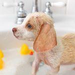 Bañar a los cachorros
