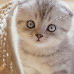El Cuidado de tu gatito