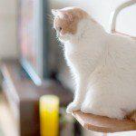 Las necesidades medioambientalales felinas