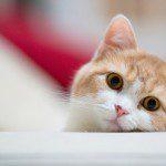 ¿Sabes cómo darle una pastilla a tu gato?