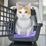 ¿Como llevo a mi gato al veterinario? El transportín